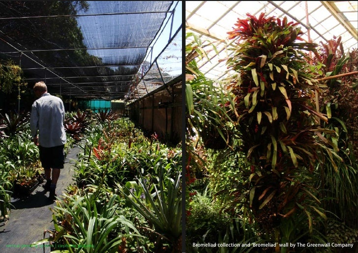 vertical greening systems   stephanie gautama   Bromeliad collection and 'Bromeliad' wall by The Greenwall Company