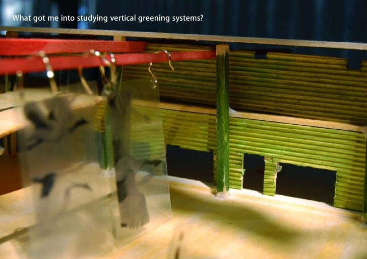 What got me into studying vertical greening systems?