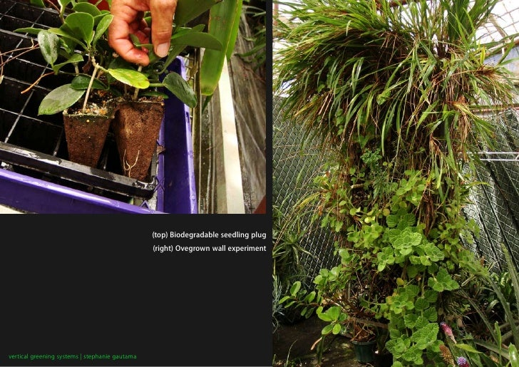(top) Biodegradable seedling plug                                                 (right) Ovegrown wall experiment     ver...