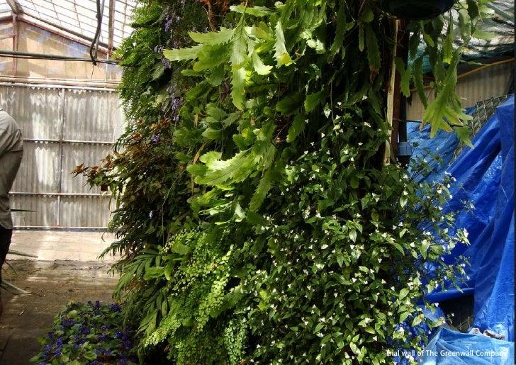 vertical greening systems   stephanie gautama   Trial wall of The Greenwall Company