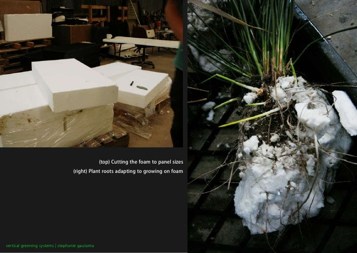 (top) Cutting the foam to panel sizes                                   (right) Plant roots adapting to growing on foam   ...