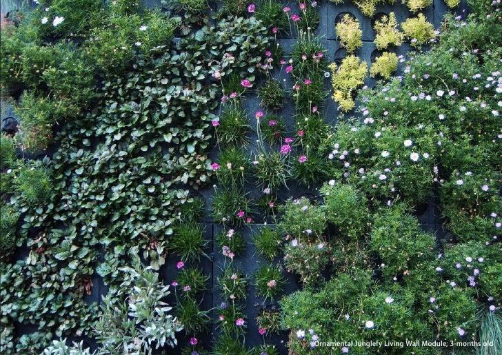 vertical greening systems   stephanie gautama   Ornamental Junglefy Living Wall Module; 3-months old
