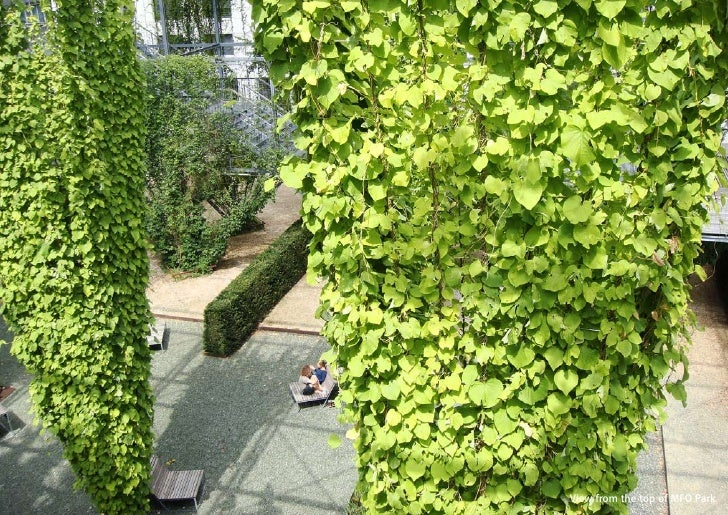 vertical greening systems   stephanie gautama   View from the top of MFO Park