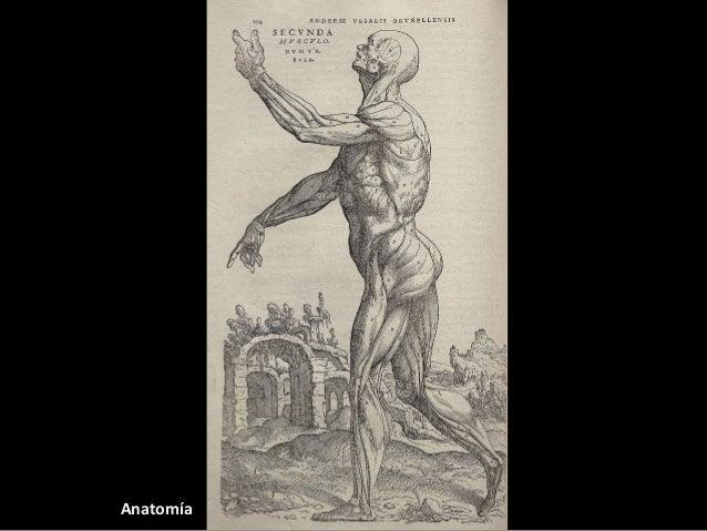 "A principal obra de Vesalio foi  ""De Humani Corpori Fabrica""  publicada en 1543, en Basilea.  Destaca a importancia da  di..."