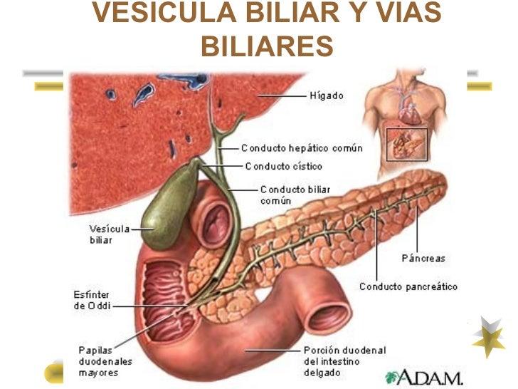 PDF) F stula biliar externa espont nea en el anciano