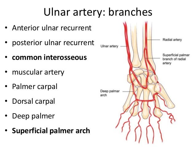 Vessels of upper limb
