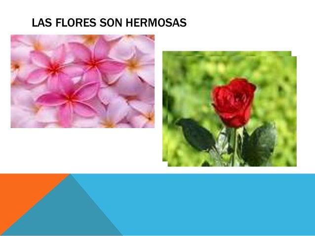 LAS FLORES SON HERMOSAS P A N T A L O N E S D E M U J E R La flor bonita