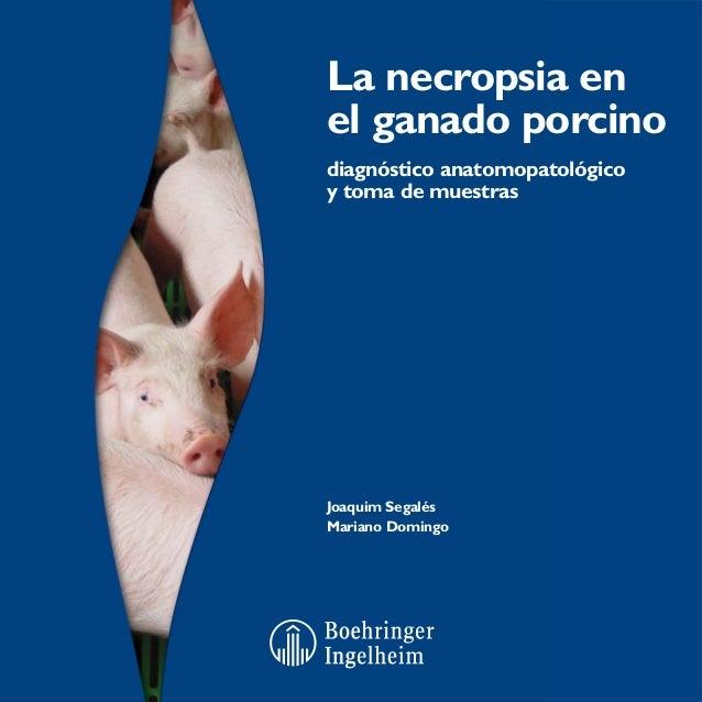 Veterinaria manual necropsia del cerdo