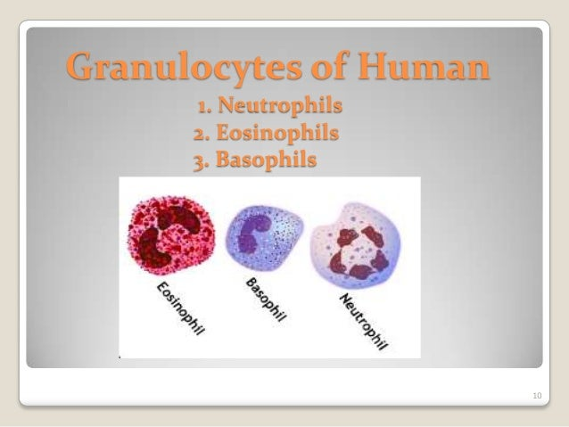 Veterinary Histology of Blood