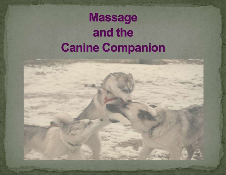 Massage and the Canine Companion<br />