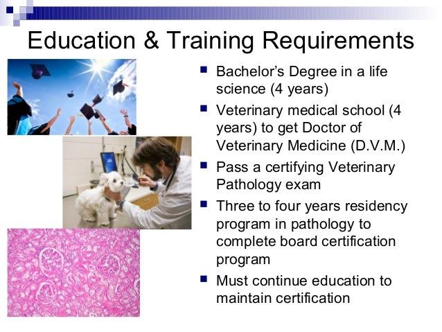 vet technician education