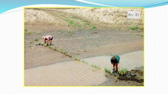 Food Soil Conservation And Pest Management Test Bank