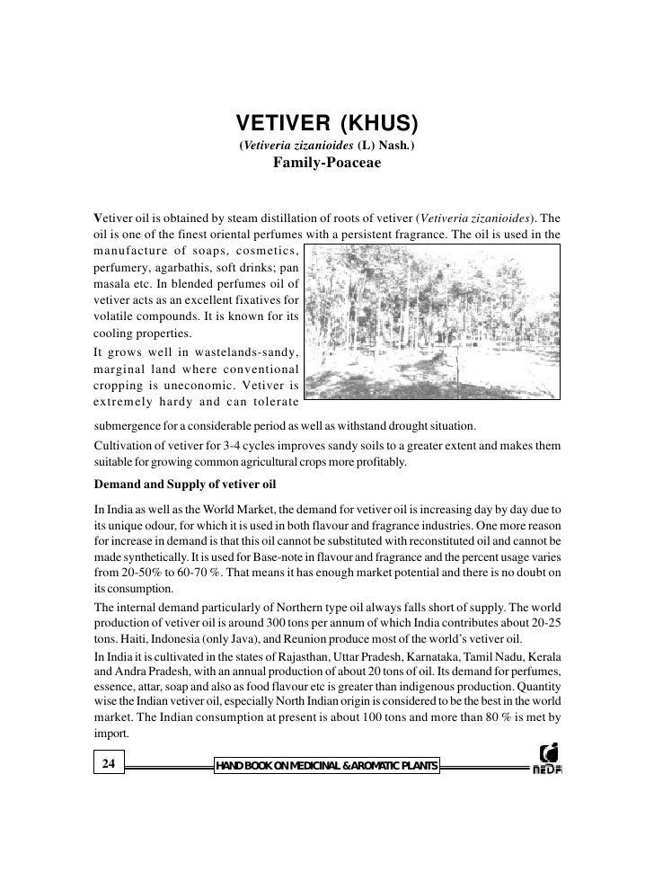VETIVER (KHUS)                                (Vetiveria zizanioides (L) Nash.)                                       Fami...