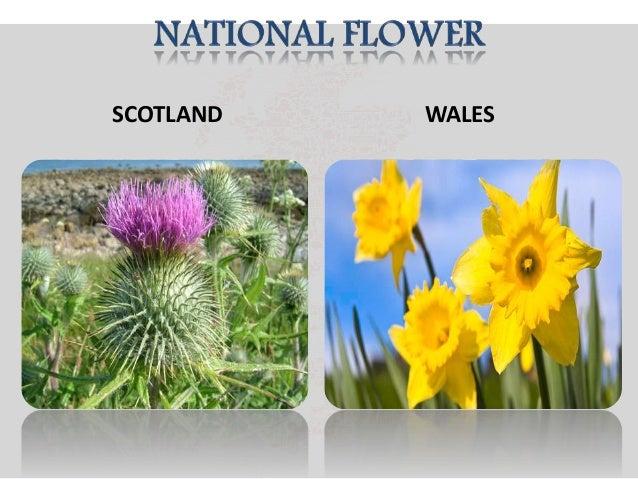 National symbols of united kingdom 27 ccuart Choice Image