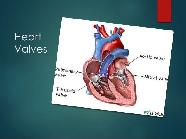 valvular heart disease Heart valve disease occurs when one or more of your heart valves doesn't work properly the heart is made up of four valves: the tricuspid, pulmonary.