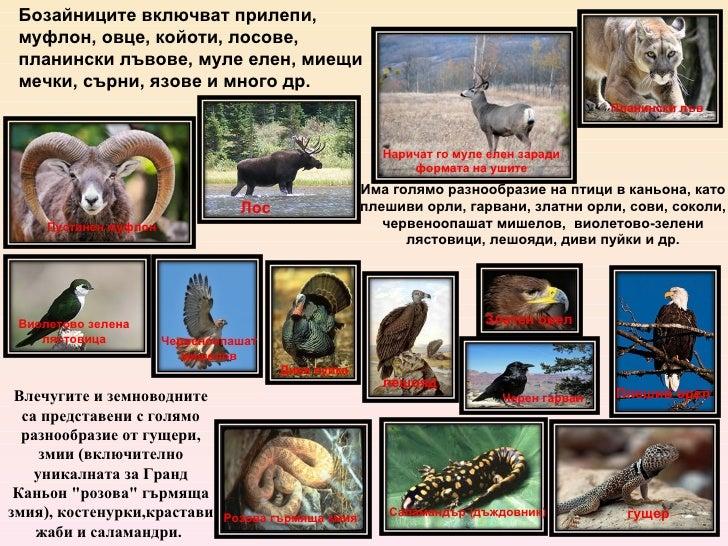 Има голямо разнообразие на птици в каньона, като плешиви орли, гарвани, златни орли, сови, соколи, червеноопашат мишелов, ...