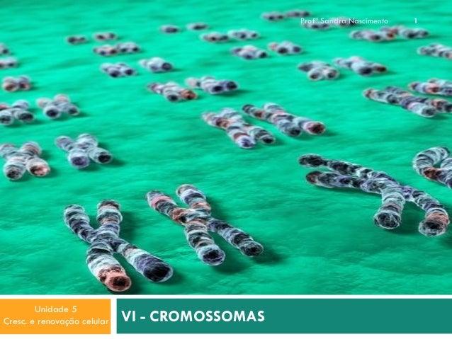 Profª Sandra Nascimento  Unidade 5 Cresc. e renovação celular  VI - CROMOSSOMAS  1