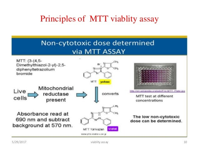 MTT ASSAY PRINCIPLE PDF DOWNLOAD