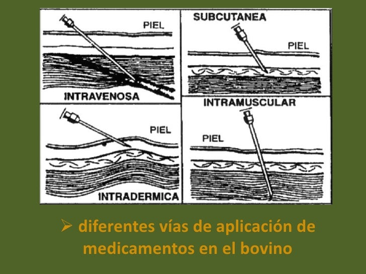 Does ivermectin kill demodex mites