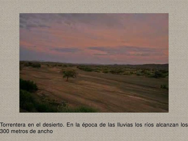 Torrentera en el desierto. En la época de las lluvias los ríos alcanzan los300 metros de ancho