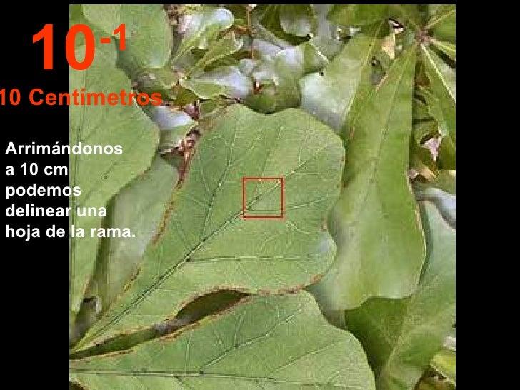 Arrimándonos a 10 cm podemos delinear una hoja de la rama. 10 -1 10 Centímetros