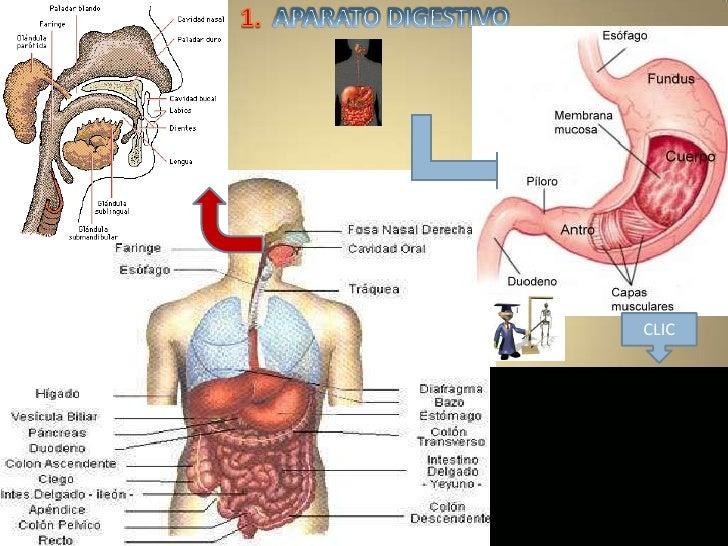 viaje por el interior del cuerpo humano