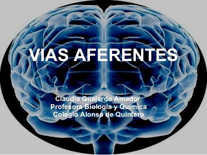 VIAS AFERENTES Claudia Guajardo Amador  Profesora Biología y Química Colegio Alonso de Quintero