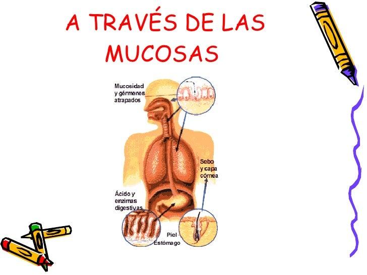 A TRAVÉS DE LAS MUCOSAS