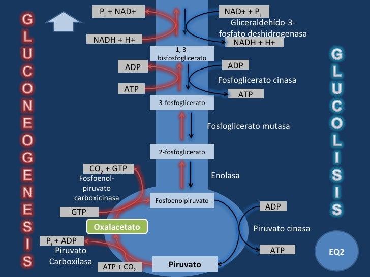 Breve guía de Tipos de metabolismo