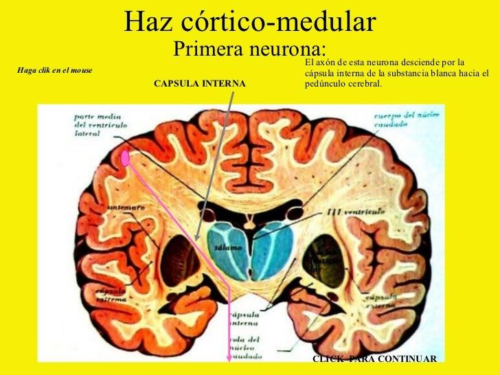 Anatomia Vias Nerviosas