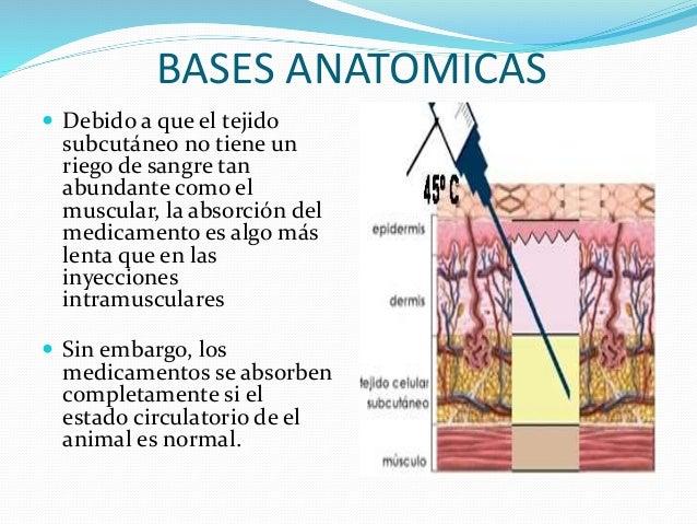 El dolor en los riñones da en el pie derecho y la temperatura
