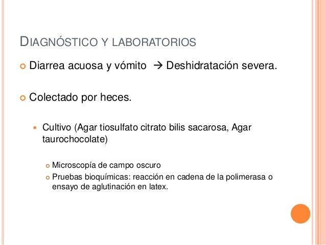 DIAGNÓSTICO Y LABORATORIOS  Diarrea acuosa y vómito  Deshidratación severa.  Colectado por heces.  Cultivo (Agar tiosu...
