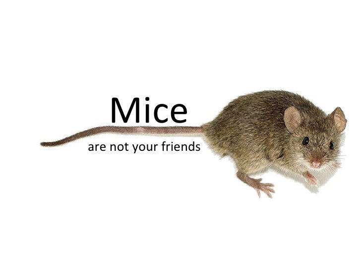 Mice are not your friends