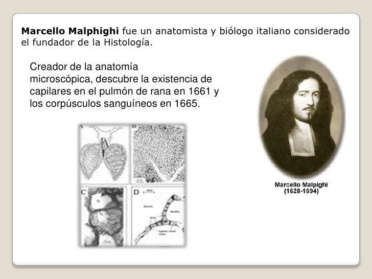 Marcello Malphighi fue un anatomista y biólogo italiano considerado el fundador de la Histología.   Creador de la anatomía...