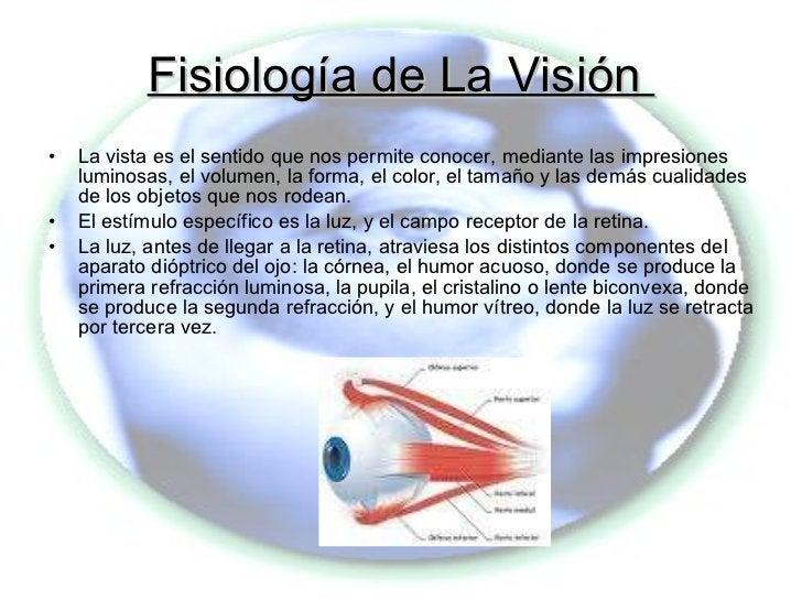 Fisiología de La Visión  <ul><li>La vista es el sentido que nos permite conocer, mediante las impresiones luminosas, el vo...