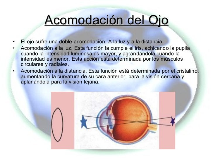 Acomodación del Ojo <ul><li>El ojo sufre una doble acomodación. A la luz y a la distancia.  </li></ul><ul><li>Acomodación ...
