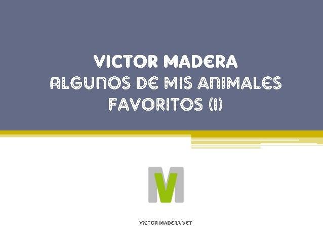 Animales favoritos de Victor Madera: El Ping�ino