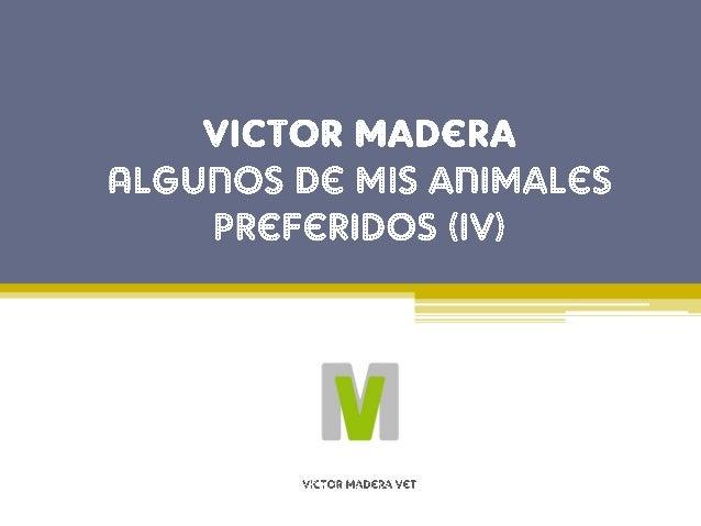 Animales favoritos de Victor Madera: El caballo