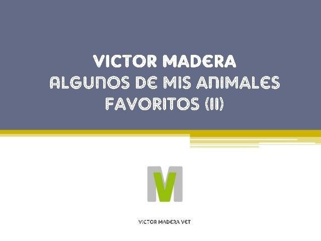 Animales favoritos de Victor Madera: El Camale�n