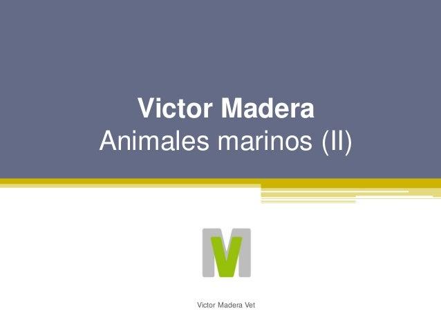 Victor Madera Animales marinos (II) Victor Madera Vet