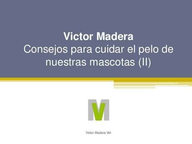 Victor Madera Consejos para cuidar el pelo de nuestras mascotas (II) Victor Madera Vet