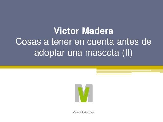 Victor Madera Cosas a tener en cuenta antes de adoptar una mascota (II) Victor Madera Vet