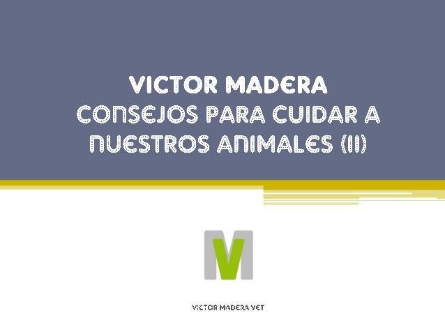Consejo de Victor Madera n�3: Ir al veterinario Ir a ver el veterinario regularmente es primordial para asegurarnos que nu...