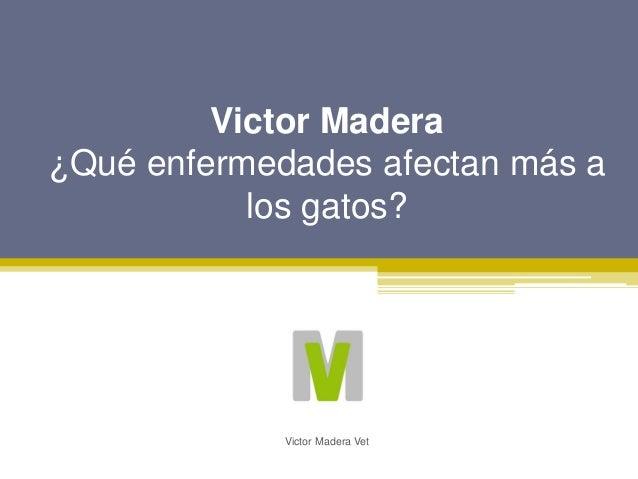Victor Madera �Qu� enfermedades afectan m�s a los gatos? Victor Madera Vet