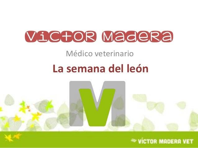 Victor Madera Médico veterinario La semana del león