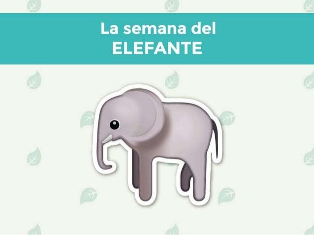 VictorMadera Médico veterinario La semana del elefante
