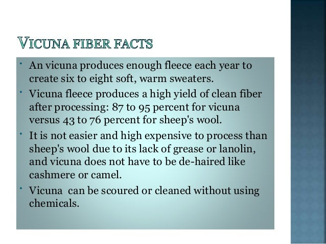  STEP-1. CHACCU CEREMONY:  The use of Vicuna fiber in the manufacture of garments, always reserved for the use of the ru...