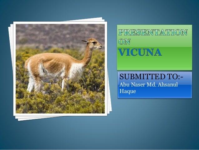 Vicuna Fiber Slide 2