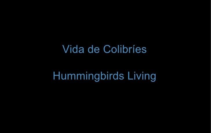 Vida de Colibríes Hummingbirds Living