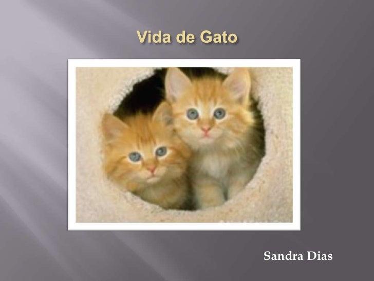 Vida de Gato<br />Sandra Dias<br />